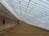 建冬暖式温室大棚要多少钱 新疆冬暖式温室大棚厂家