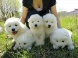 南昌哪里有宠物领养机构南昌宠物免费领养南昌狗狗免费领养