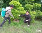 惠州博罗白蚁防治,专业高效环保,免费上门检测害虫情况