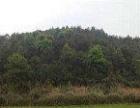 桂林市永福县苏桥镇400亩旱地出租,适用于种养殖