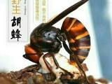 云南林城生物专业从事土蜂、胡蜂、雄蜂老蜂子生产与销售