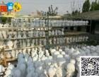 杭州市石膏娃娃白胚厂家直销 便宜的石膏彩绘娃娃白胚哪里有