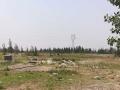30亩土地带一栋鸡棚,2栋羊舍,2个集装箱仓库