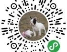 微信宠物交易平台,各种宠物应有尽有