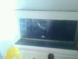 一米的鱼缸带潜水灯出售