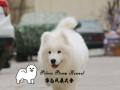 珍宝工作犬专用狗粮银色风暴犬舍