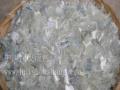 湖北PE等废塑料回收