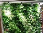 室内生态植物墙,无土栽培设备加盟