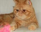 坐标张店的CFA注册猫舍的猫咪跟大家见面了