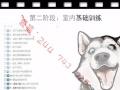 「正版」新版训犬教程教程 训犬教程视频