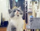 批发零售成猫幼猫公母都有品种齐全