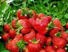 清明节去黄岛野生动物园+草莓采摘一日游c