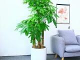 苏州姑苏绿植租摆绿化养护办公室植物租赁