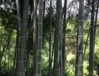 福建省龙岩市新罗区30亩毛竹土地出租