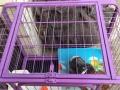 新买的狗笼子因为家里没地方放转让