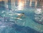 许昌东区的游泳馆,游泳培训基地