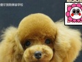 山东宠物美容,临沂宠物美容,宠物美容