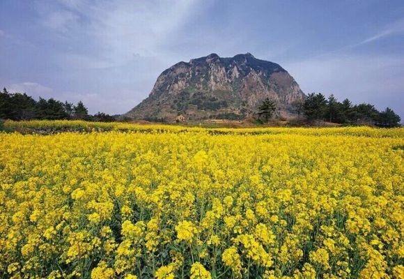 度假旅游首选韩国济州岛