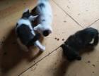 自家养的猫猫