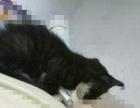 转送一个爱猫人士养