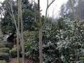 湖北宜昌宜都市五眼泉镇7亩山林土地9.8万出售