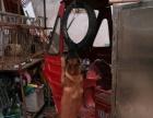专业带训各种宠物犬