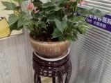 南昌红谷滩植物租花绿植租摆专业办公室花卉租赁实惠