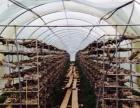 出售养殖种植基地