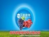 【北农华】葡萄病虫害|葡萄霜霉病防治|葡萄炭疽病防治