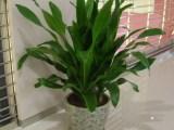 郑州兰艺花卉专业绿植租赁,花卉租摆,租花公司,花卉苗木出售