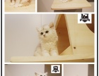 长沙拜迪宠物连锁各类纯种名猫 质保30天!终身售后!