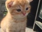 上海广州深圳北京波斯猫价钱 淘宝搜:双飞猫