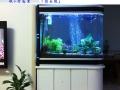 宠物馆治疗鱼病及鱼缸鱼池清洗