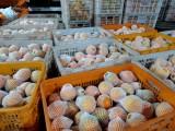 江西贛南臍橙 果園直供 一件代發貨 現摘現發 電商微商代發貨