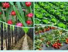 深圳公司员工旅游团建野炊生态农家乐一日游水果采摘攻略