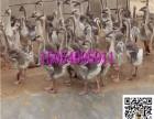 鸵鸟养殖利润怎么样 鸵鸟价格 鸵鸟图片