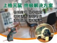 杭州装修防白蚁-杭州餐厅除蟑螂-杭州白蚁防治报价