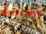 小龙虾养殖技术小龙虾苗价格今日虾苗价格行
