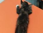 两个月小猫咪已打一针疫苗