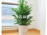 坤石园林专业从事植物租摆行情等产品生产及研发