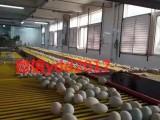 广西北部湾红树林咸海鸭蛋20个普装咸香味美古法制作盐蛋