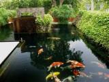 上海水族市場,上海魚缸專賣,上海錦鯉魚批發