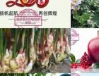 上海植物养发-植草缘总代理