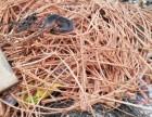 大连高价回收各种废紫铜管废铜销子