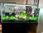 无锡清洗鱼缸 鱼缸维护 观赏鱼养护配送水族器材更换