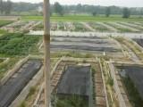安徽青蛙种苗 安徽青蛙种苗培育基地
