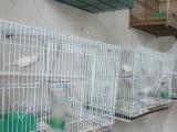 出售16年白玉小鸟