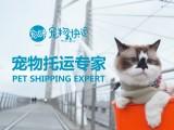 北京寵物托運 平臺投保價格優惠 空運鐵路汽運全國
