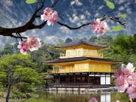 学日语找好口碑机构--杭州朝日教育培训中心