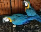 蓝黄鹦鹉 金刚鹦鹉 陆龟